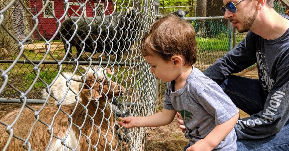 kid feeds goat