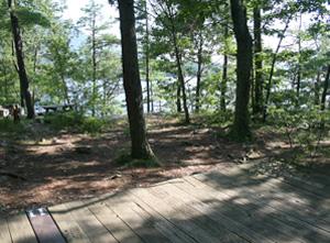 Vicars Island Campsite 11