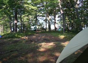 Vicars Island Campsite 4