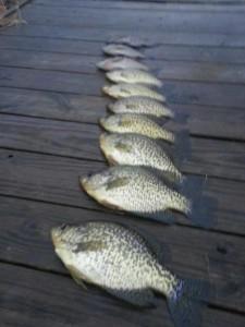 april fishing 3-thumb-440x586-13036