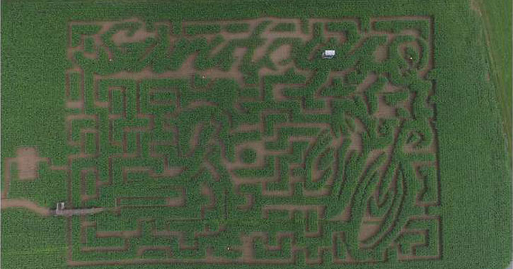 a corn maze from above