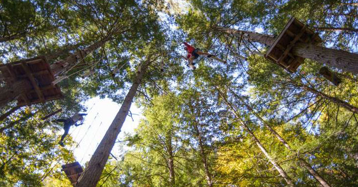 person doint treetop course
