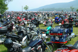 large group of motorcycles on a lawn