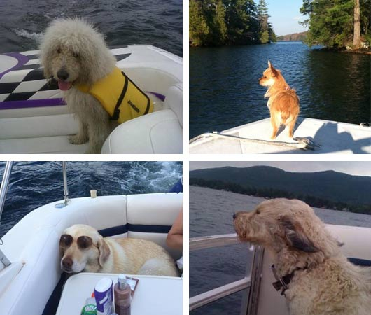 dogs boating lake george ny