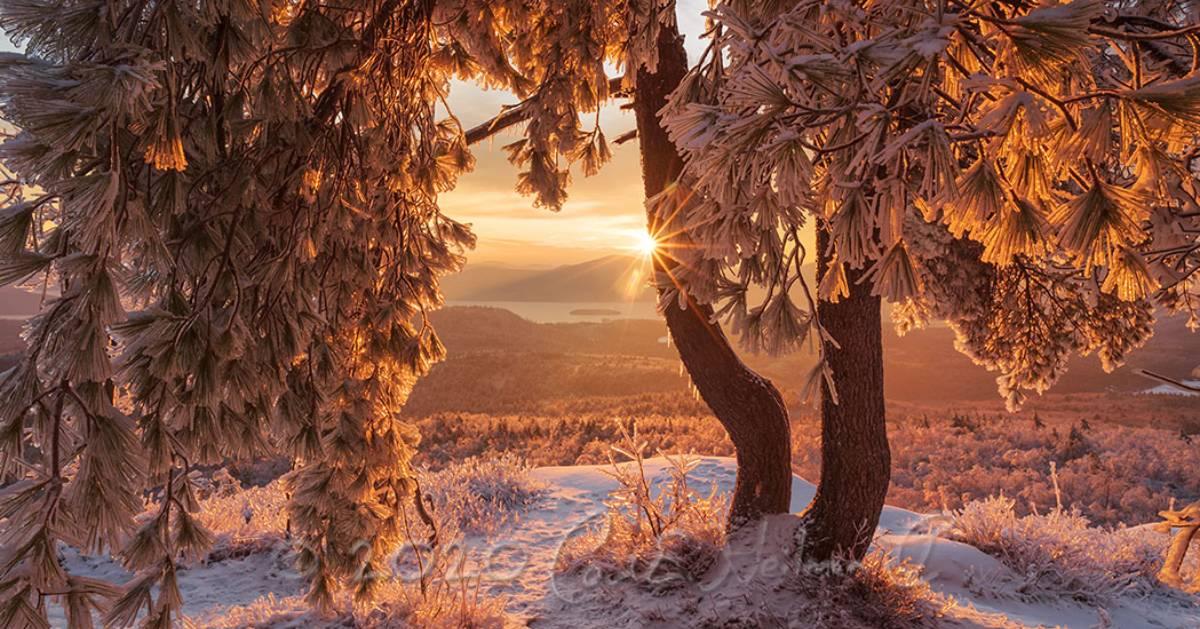 winter tree on summit