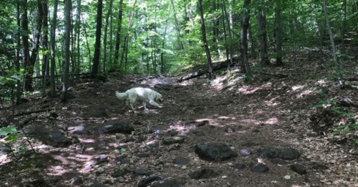 a white dog on a rocky hiking trail