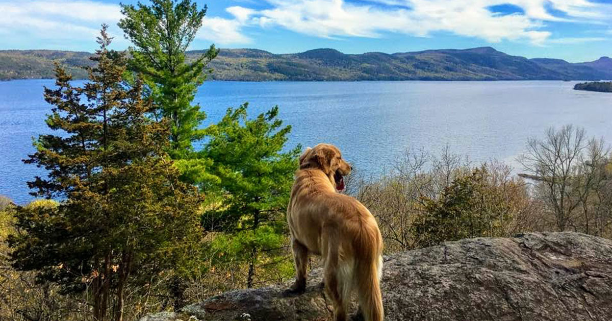 a dog on a rock looking out at lake