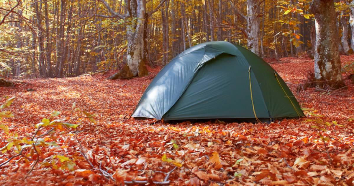 a tent set up in the woods in the fall, leaves on the ground