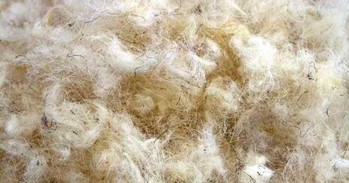Macro shot of primarily white wool fibers with hints of black