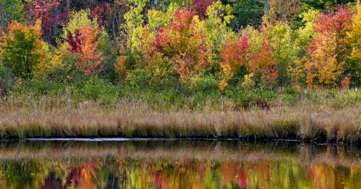 trees with fall foliage reflected in water