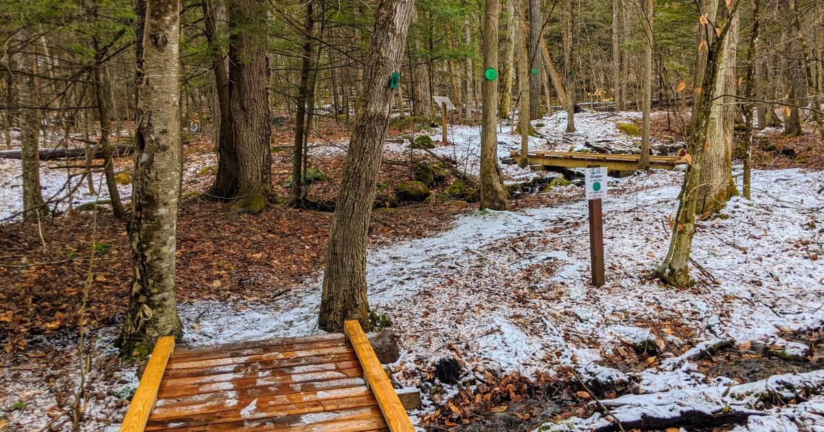 trail in woods in winter