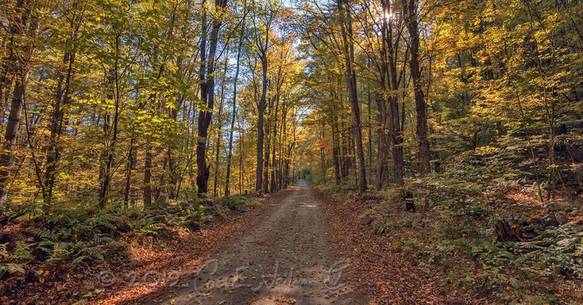 a hiking trail in the woods in the fall