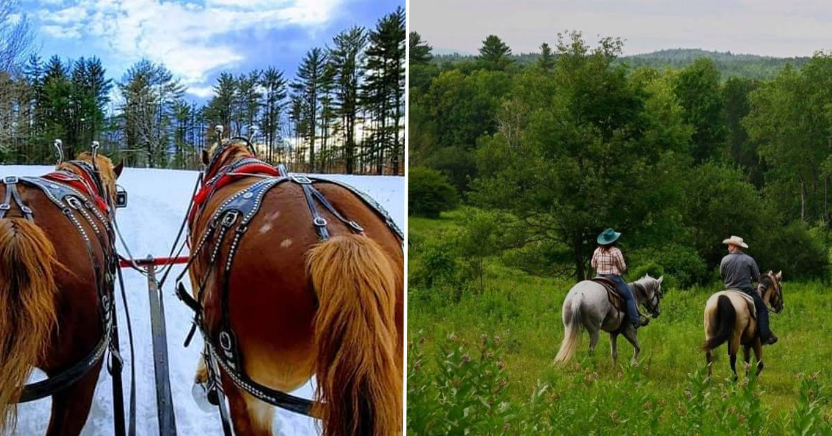 split image with horses in winter on the left and horses in winter on the right