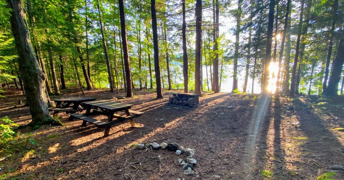 island with trees, picnic tables, fire pit
