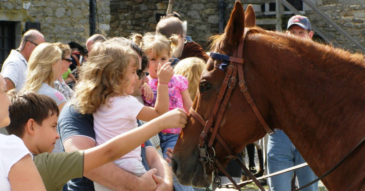 kids checking out a horse