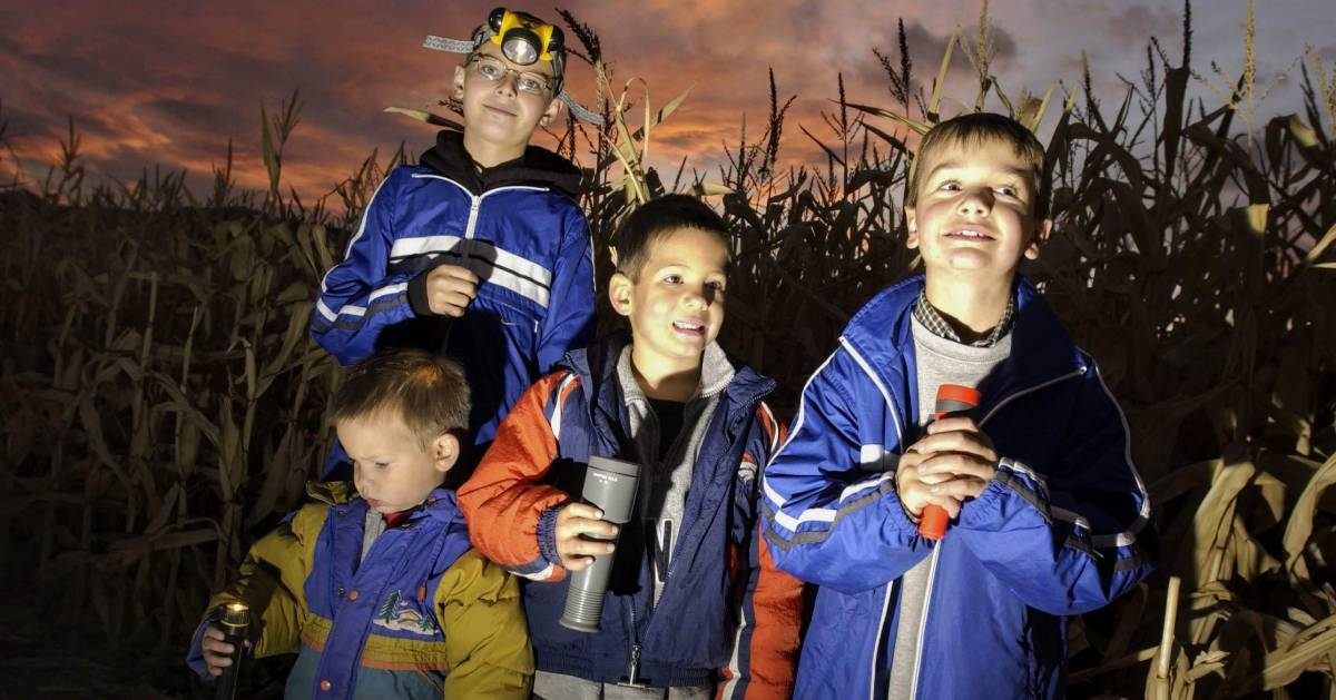 group of kids with flashlights in corn maze at night