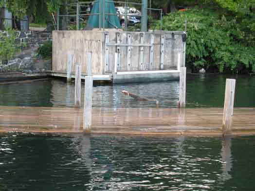 Dock Flooded
