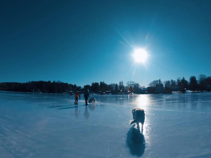 Two kids and two dogs walking on ice on sunny day