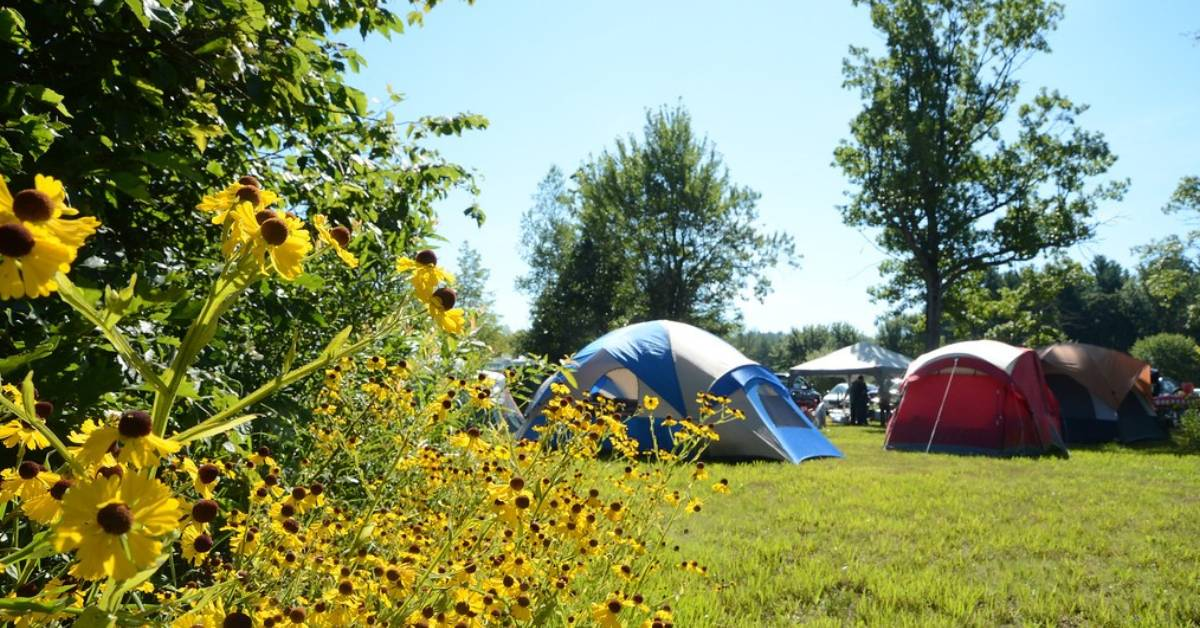 tents set up near flowers