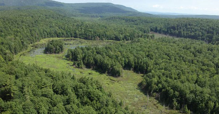 an aerial view of a forest