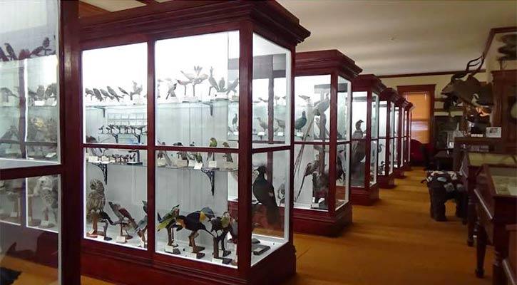 displays in the Pember Museum