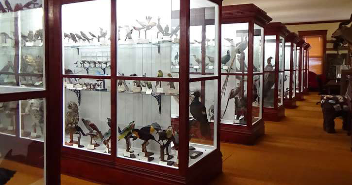 cases of birds and animals on display at a museum