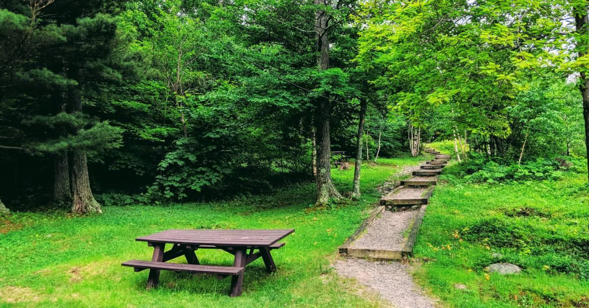 picnic table by trail