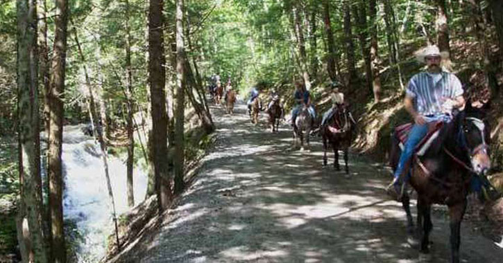 people riding horses on a trail in the woods