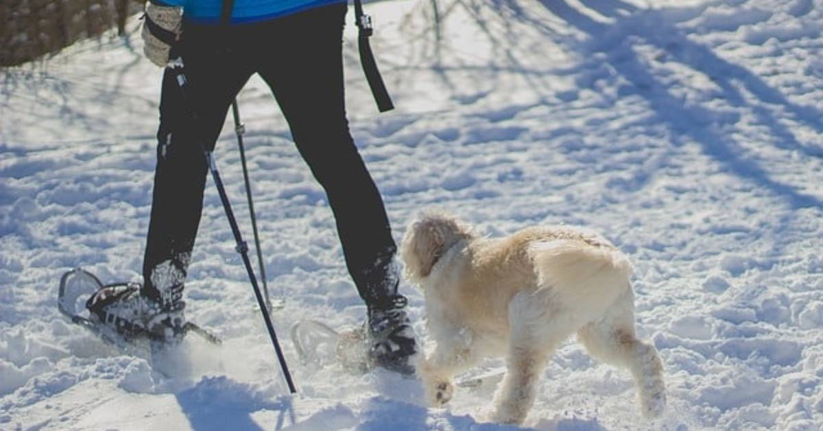 a person with a dog walking in snowshoes with a dog following