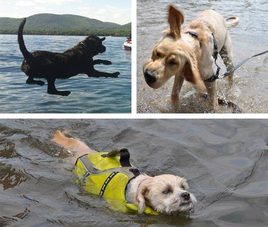 dogs swimming in lake george