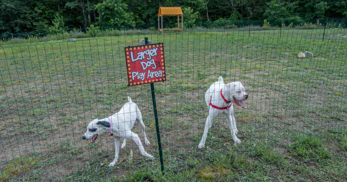two dogs in fenced in dog park area