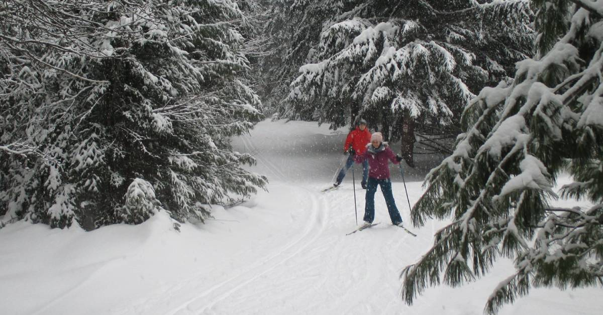 two cross country skiers on a snowy trail
