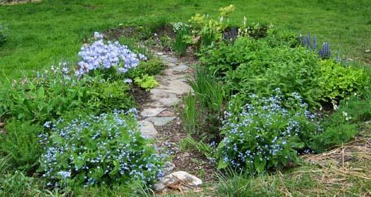 Rain Gardens Perfect time to plant Lake Friendly Living – Rain Garden Plants