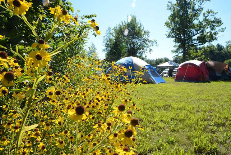 tents in a field of wildflowers