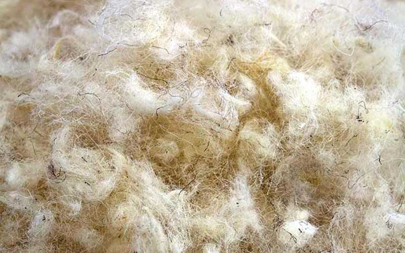 Macro shot of primarily white wool fibers with hints of black