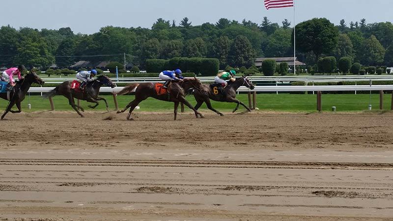 Thoroghbred Horses on the Saratoga Race Track
