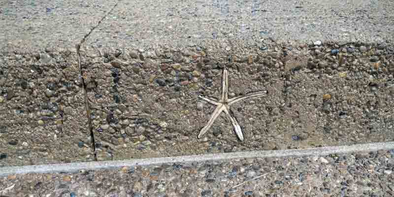 Starfish in the sidewalk