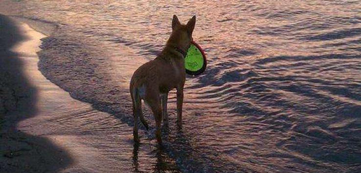 Dog Beach Lake George NY