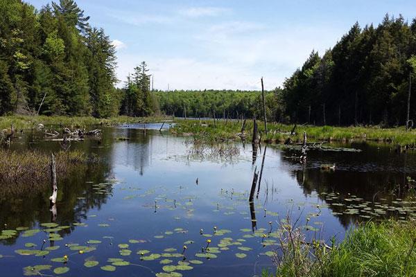 palmer-pond