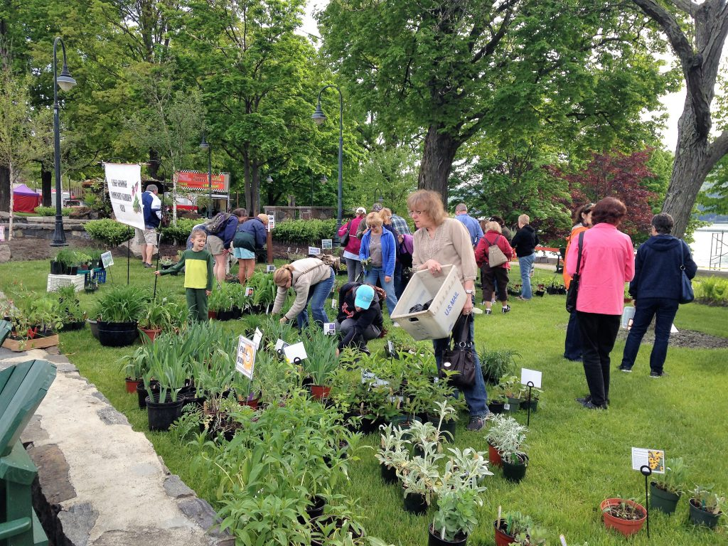 people looking for perennial plants