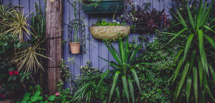 plants against purple wall