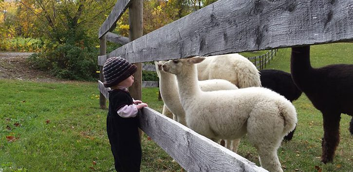a girl near small lambs