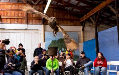 horned owl flying in room
