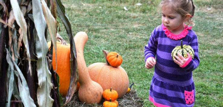 child with pumpkins at heritage, harvest & horse festival