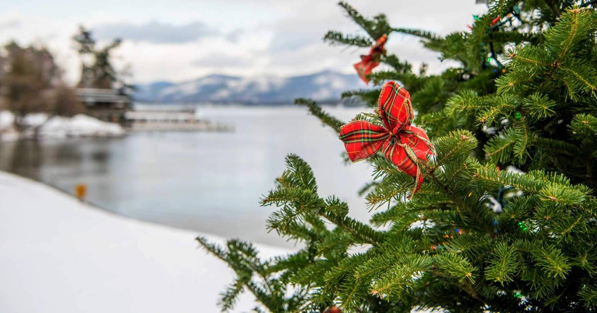 Christmas tree in foreground, Lake George in background