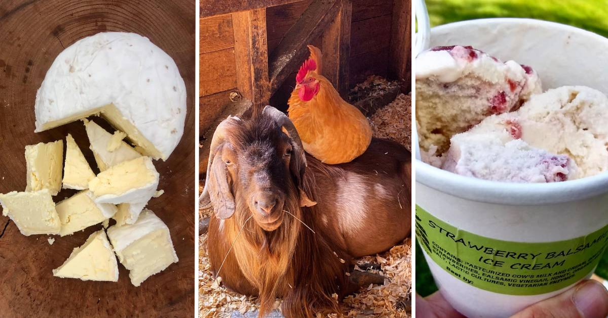 image split in three of cheese, goat and chicken, and ice cream