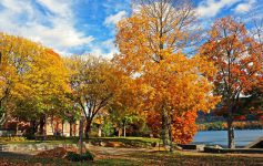 fall foliage in park